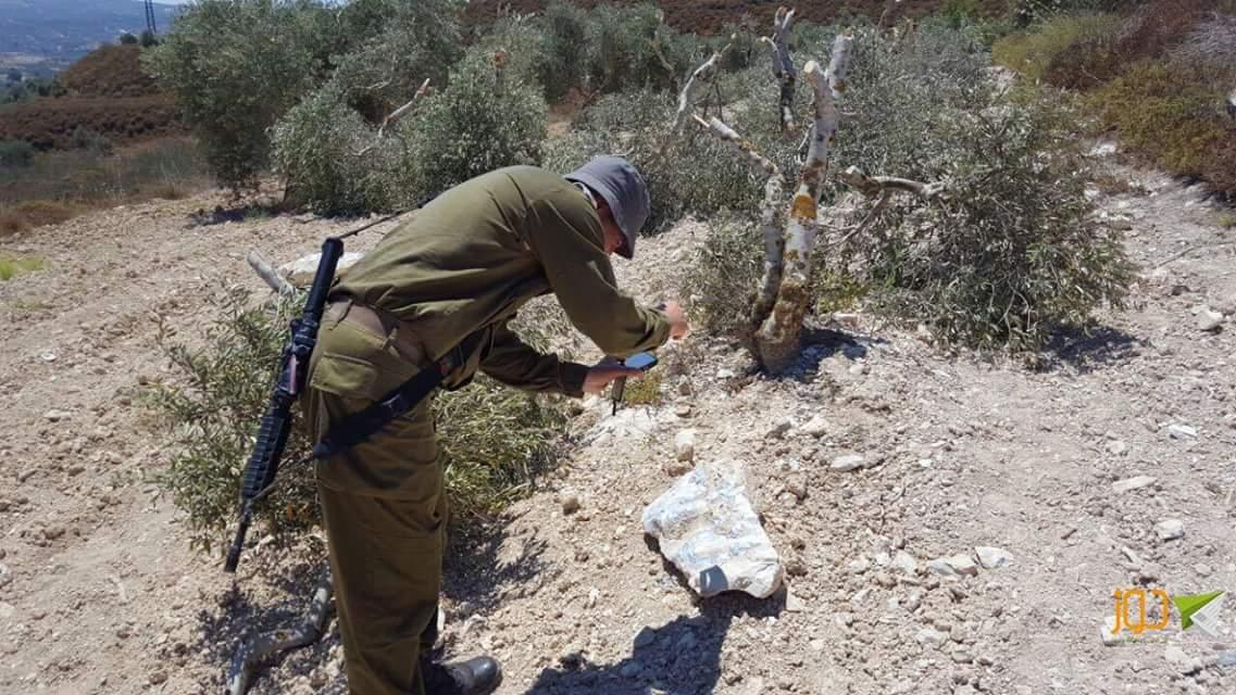 مستوطنون يقتلعون أشجارا من بورين وحوارة