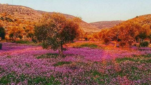 الربيع في قرية بزاريا